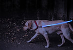 4id LED Rechargeable Lite Up Dog Leash
